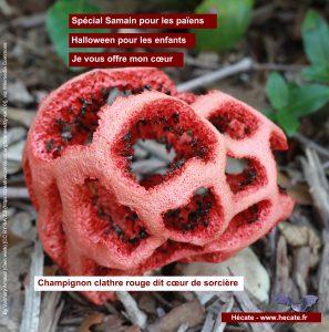 Clathre rouge - Coeur de Sorcière
